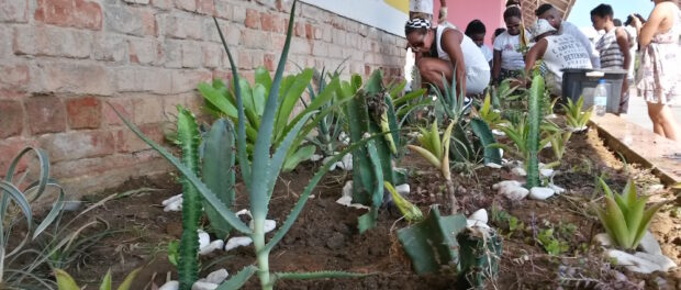 New cactus bed planted by Careca Artes and community residents