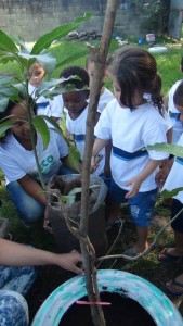 Eco Rede Tree Planting in 2014