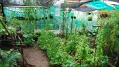 Community garden in Formiga