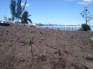 Lone planted tree looking out across Jacarepaguá Lagoon