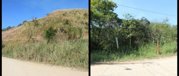 Reforestation Before/After