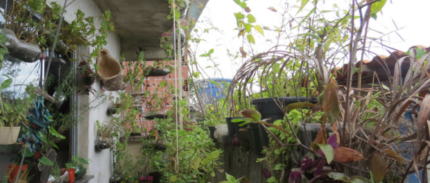 Graça grows several varieties of plants on her porch