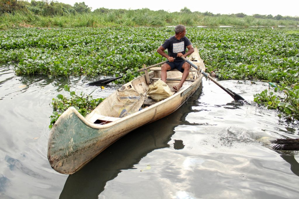 Raimundo looks towards the mass of gigoia plants he must row through before attempting to cross the eco-barrier. Photo by Sophia Zaia