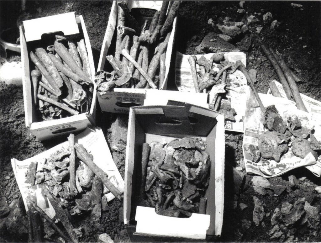 Bones unearthed by archaeologists at the New Blacks Institute