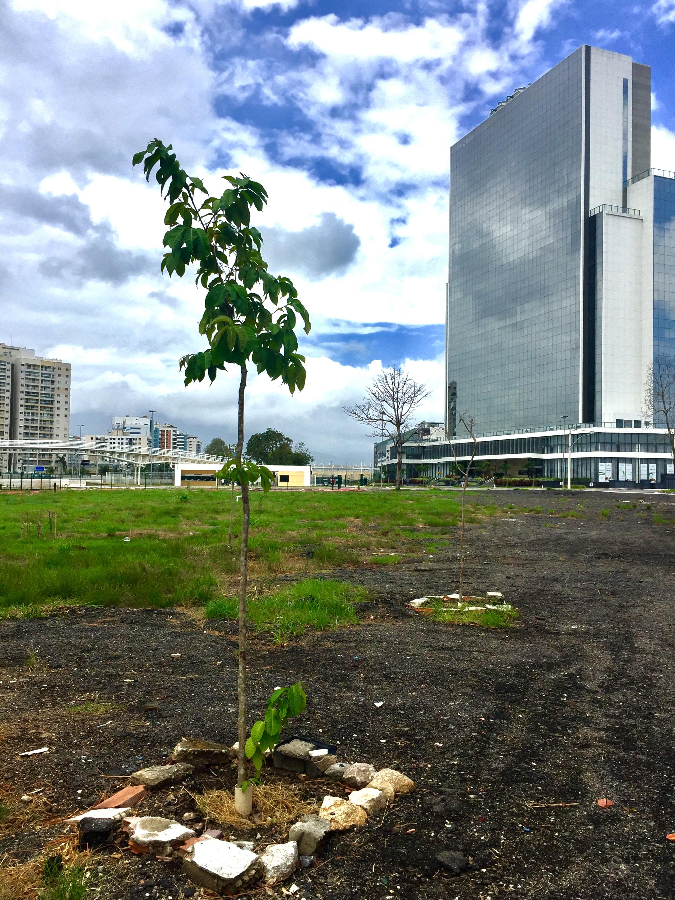 Residents are reforesting the abandoned gravel lots surrounding Vila Autódromo