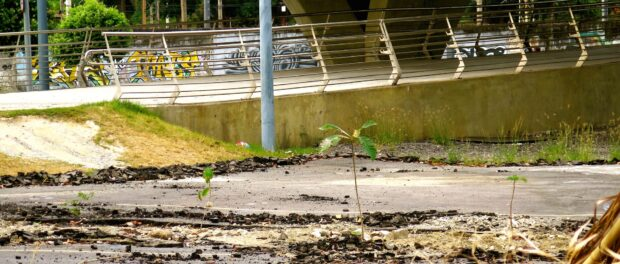 Trees growing out of cracks in the asphalt, in front of the R$14 million pedestrian walkway