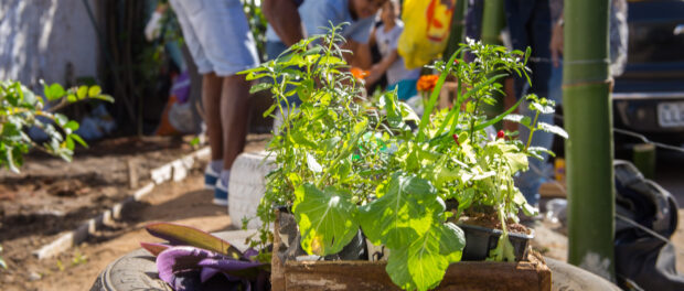 Planting Seedlings - Photo by Diogo de la Vega