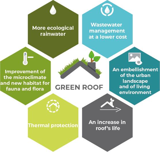 green roof favela profile sustainablefavelanetwork. Black Bedroom Furniture Sets. Home Design Ideas