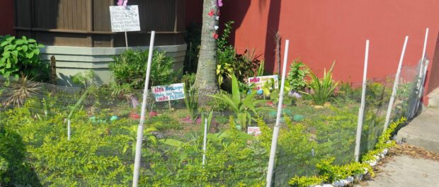 Community garden in Morro dos Prazeres